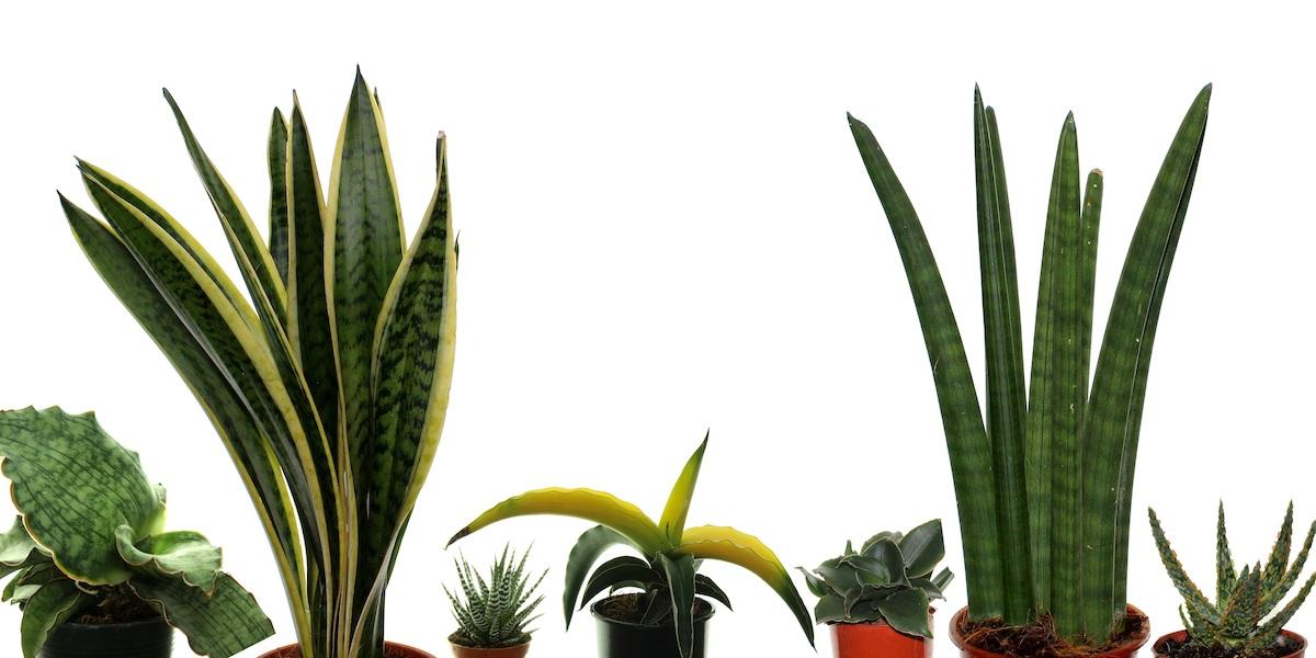Topfpflanzen-Succulentenmix-2010_001_40-4000x2000