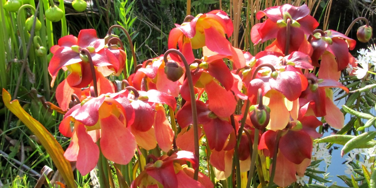 Moorbeetpflanze-11-0230-9240-5-1746_021_40-4000x2000