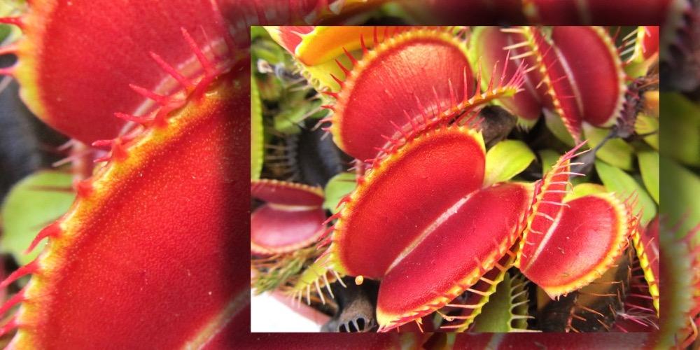 Moorbeetpflanze 1521 551 (4) (4000x2000)