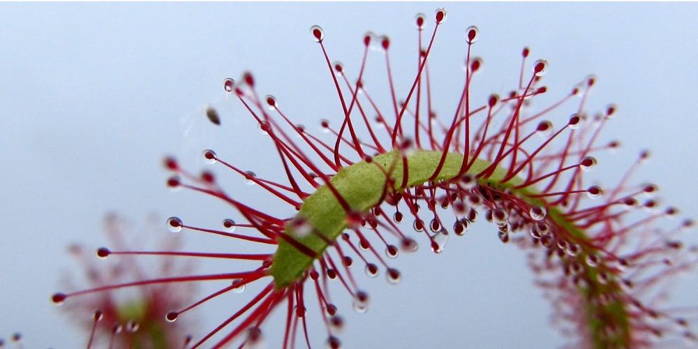 Moorbeetpflanze 1536 105 (4) (4000x2000)