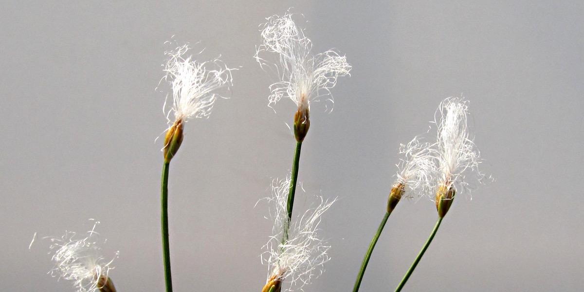 Moorbeetpflanze 1739 072 (42) (4000x2000)