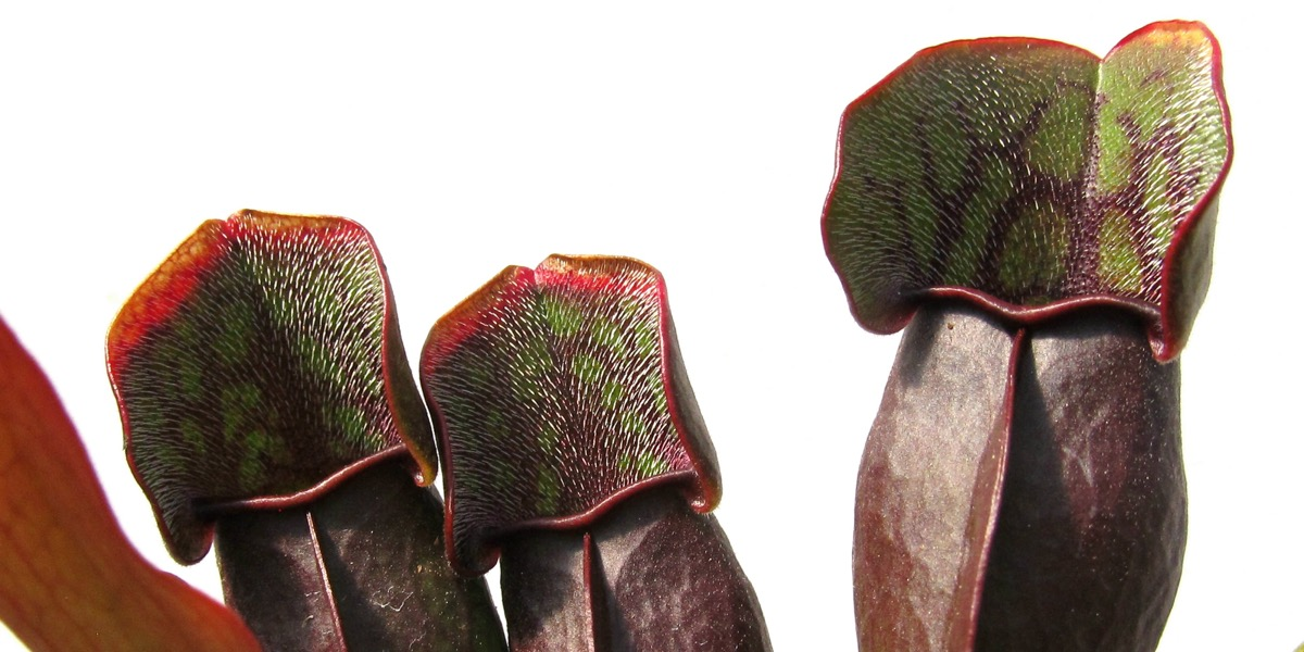 Moorbeetpflanze-1739-259-40-4000x2000