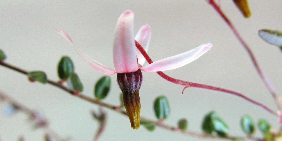 Moorbeetpflanze-1739_514_40-4000x2000