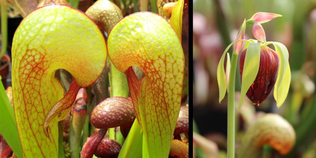 Moorbeetpflanze-1746_289_40-4000x2000