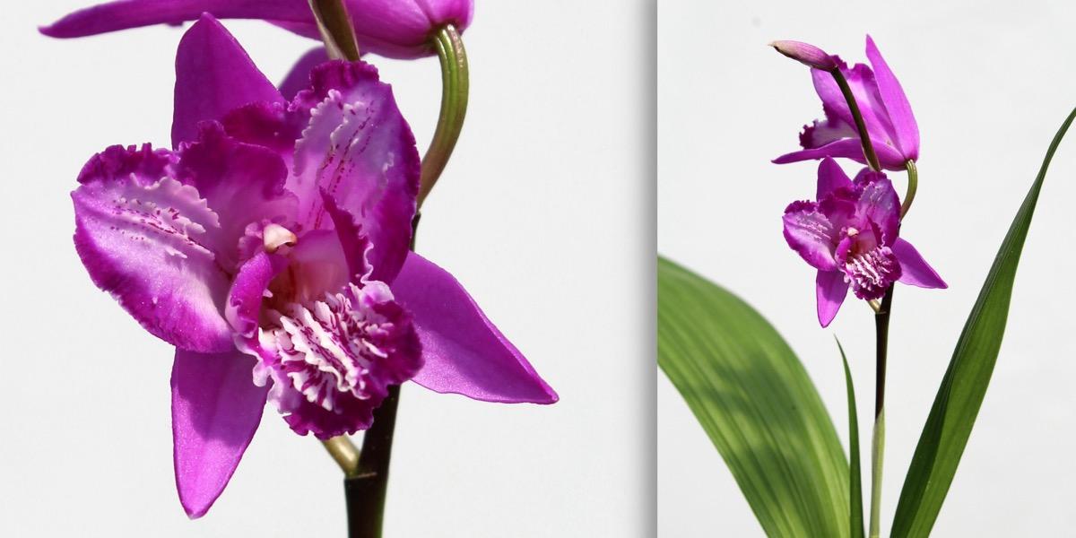 Moorbeetpflanze-1818_390_40-4000x2000