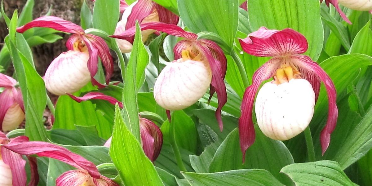 Orchideen blumen kopf orchideen 1637 024 40 4000x2000 altavistaventures Images