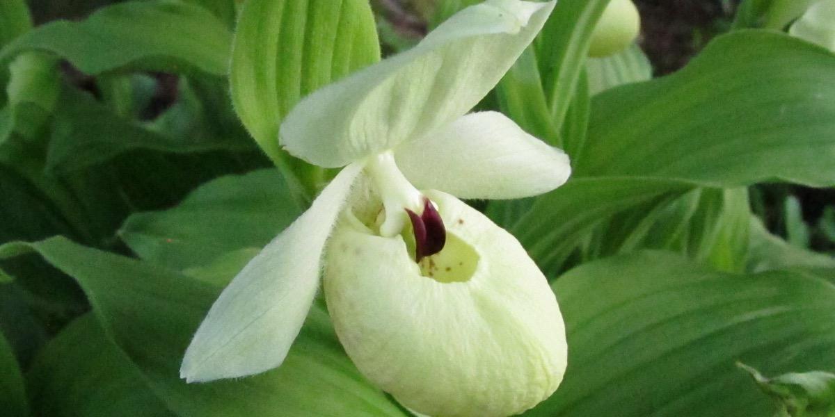 Orchideen 1637 532 (40) (4000x2000)