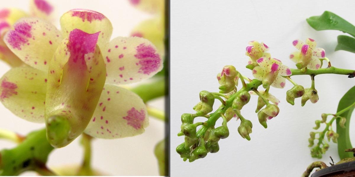 Orchideen 1722 812 (40) (4000x2000)