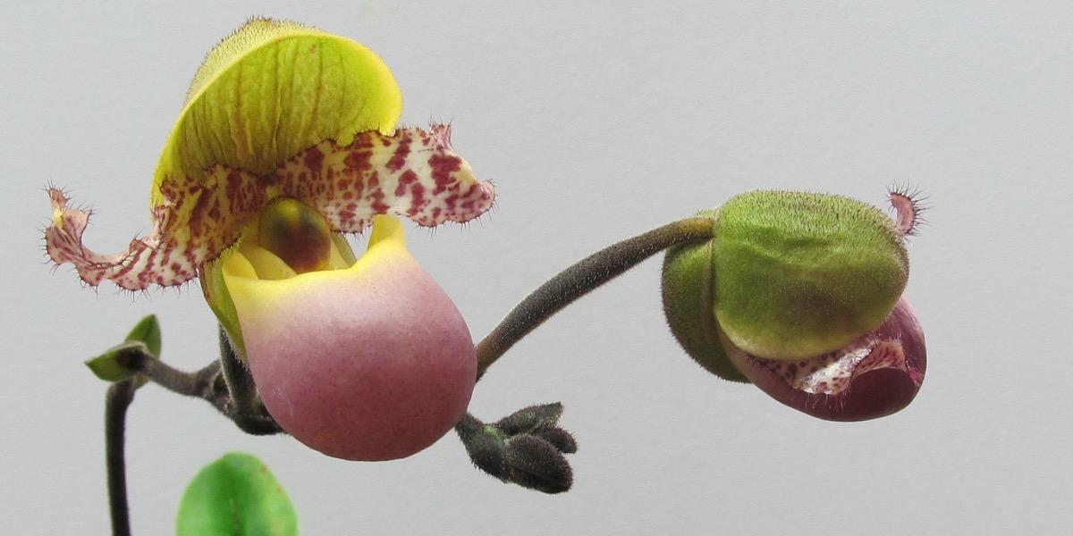 Orchideen 1764_672_(40) (4000x2000)