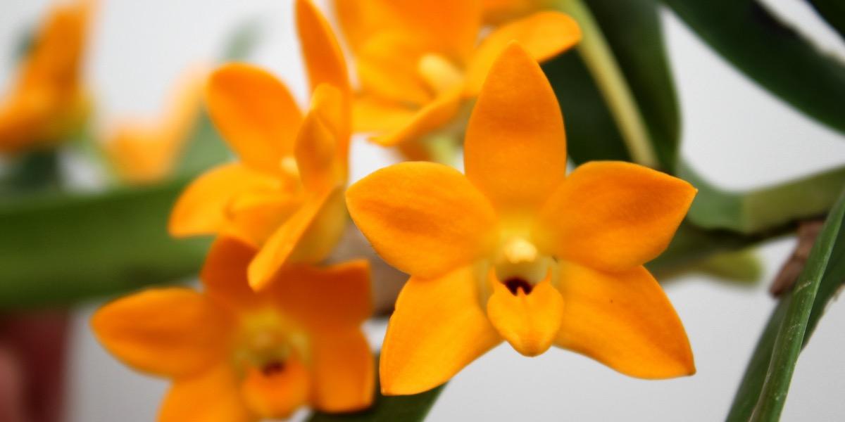 Orchideen-1906_066_40-4000x2000