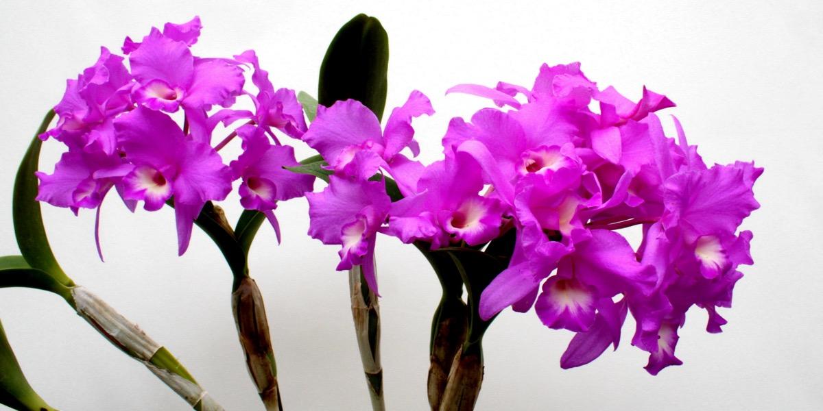 Orchideen-1908_188_40-4000x2000