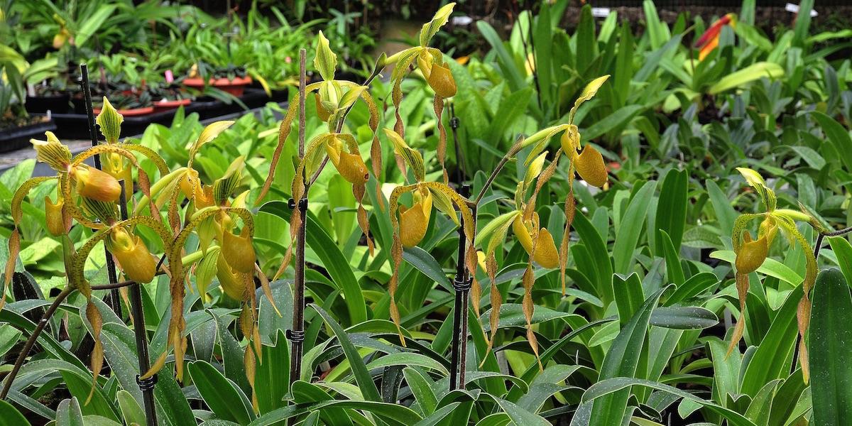 Orchideen Kopf orchideen blumen kopf