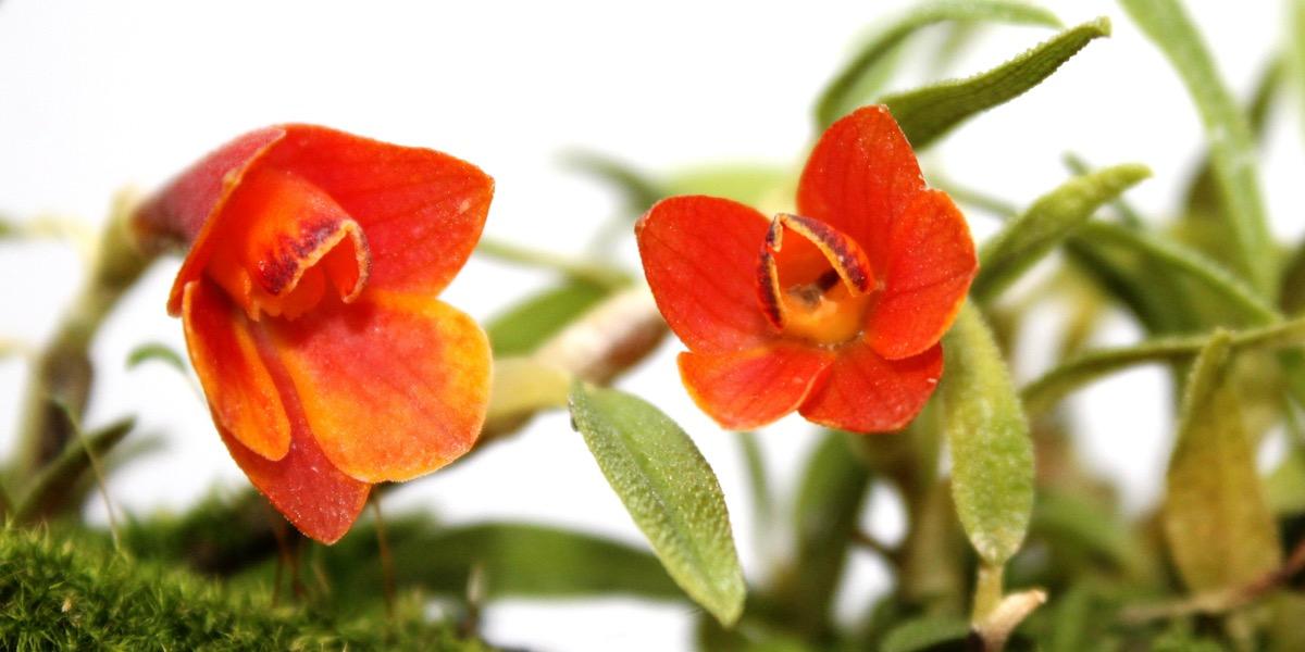 Orchideen-1864_399_40-4000x2000