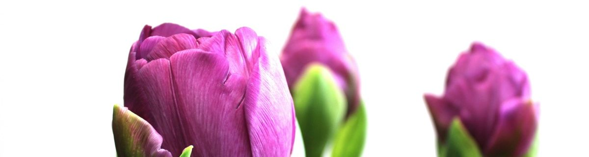 Blumen Kopf